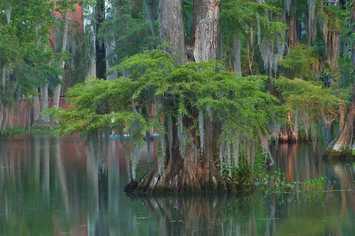 Lafayette Louisiana